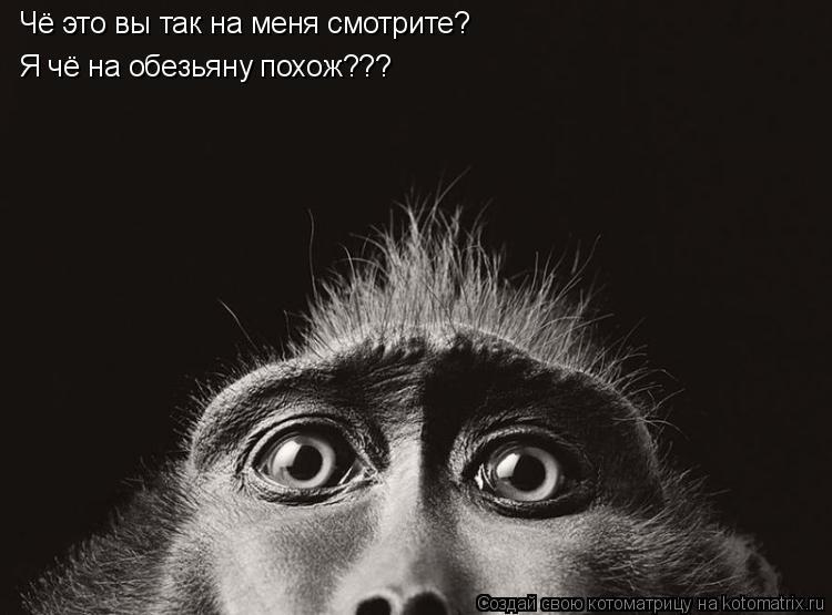 Котоматрица: Чё это вы так на меня смотрите? Я чё на обезьяну похож???
