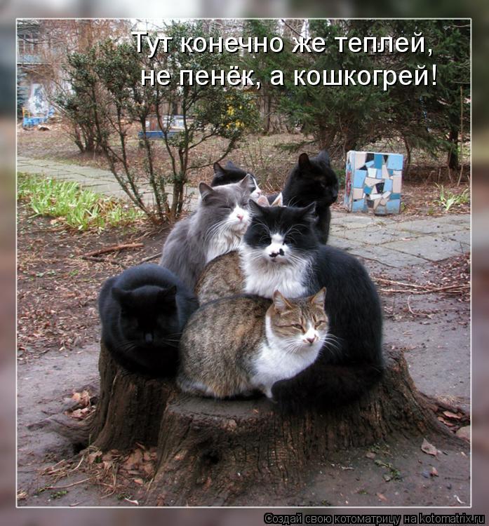 Котоматрица - Тут конечно же теплей,  не пенёк, а кошкогрей!