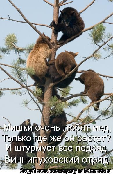 http://kotomatrix.ru/images/lolz/2009/03/01/RK.jpg