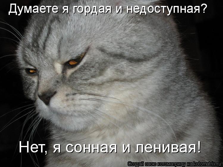 Котоматрица: Думаете я гордая и недоступная?   Нет, я сонная и ленивая!
