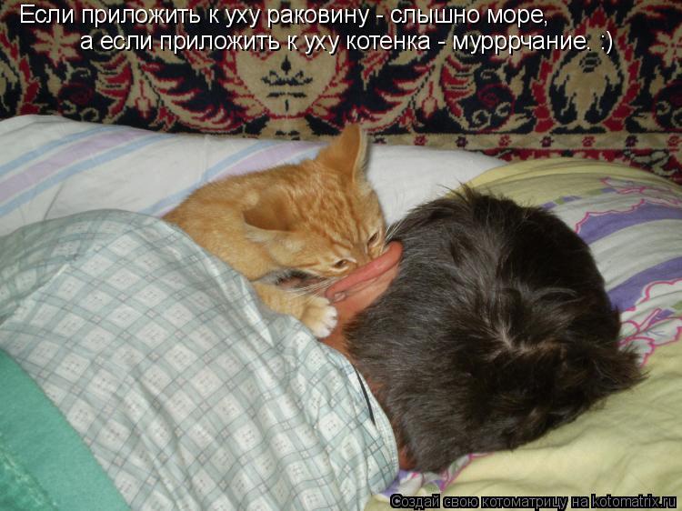 Котоматрица: Если приложить к уху раковину - слышно море, а если приложить к уху котенка - мурррчание. :)