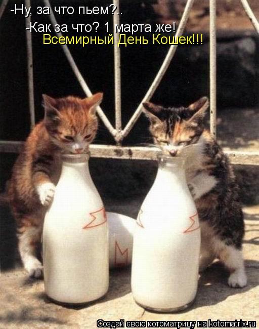 Котоматрица: -Ну, за что пьем?.. -Как за что? 1 марта же! Всемирный День Кошек!!!