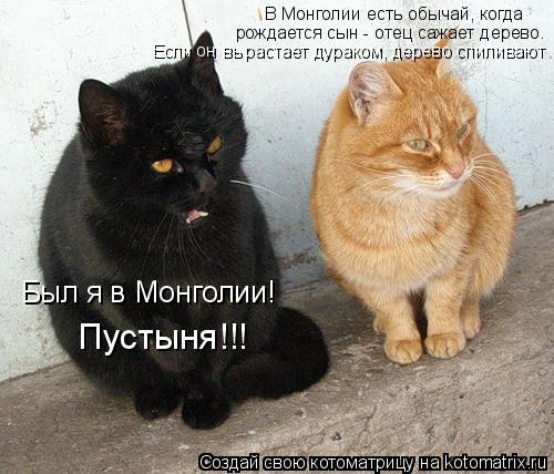 Котоматрица: В Монголии есть обычай, когда рождается сын - отец сажает дерево. Был я в Монголии! Если он вырастает дураком, дерево спиливают Пустыня!!!