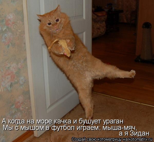 Котоматрица: А когда на море качка и бушует ураган Мы с мышом в футбол играем: мыша-мяч, а я Зидан