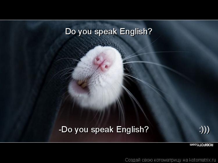 Котоматрица: Do you speak English? -Do you speak English? :)))