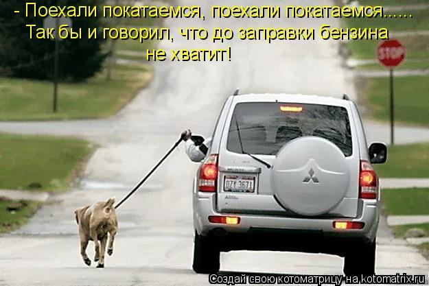 Котоматрица: - Поехали покатаемся, поехали покатаемся...... Так бы и говорил, что до заправки бензина  не хватит!