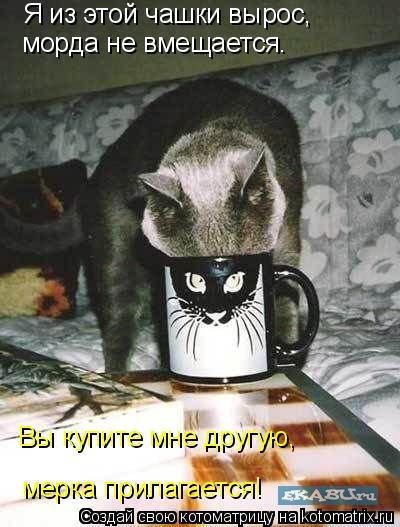 Котоматрица: Я из этой чашки вырос, морда не вмещается. Вы купите мне другую, мерка прилагается!