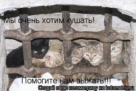 Котоматрица: Помогите нам выжать!!! Мы очень хотим кушать!