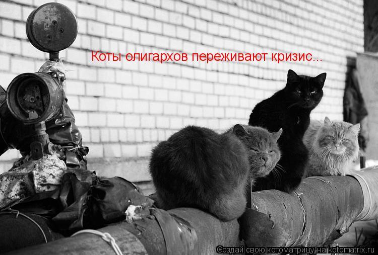 Котоматрица: Коты олигархов переживают кризис...