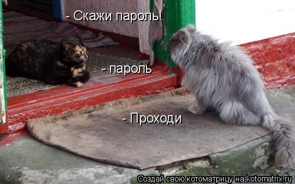 Котоматрица: - пароль   - Скажи пароль! - Проходи