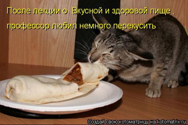 Котоматрица: После лекции о «Вкусной и здоровой пище»,  профессор любил немного перекусить