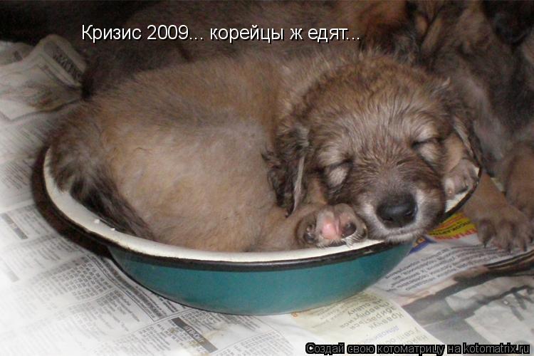 Котоматрица: Кризис 2009... корейцы ж едят...