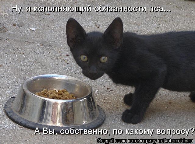 Котоматрица: Ну, я исполняющий обязанности пса... А Вы, собственно, по какому вопросу?