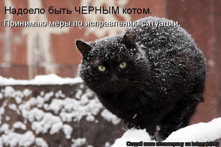 Котоматрица: Надоело быть ЧЕРНЫМ котом. Принимаю меры по исправлению ситуации.