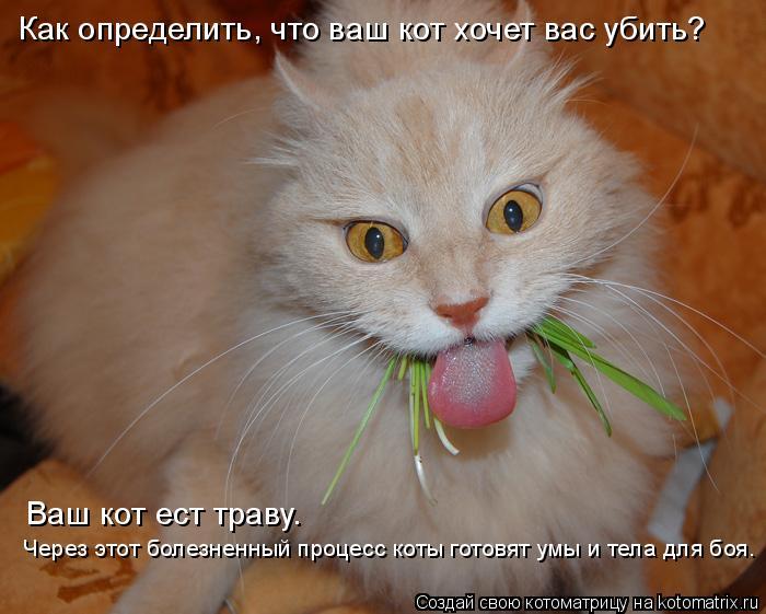 Котоматрица: Как определить, что ваш кот хочет вас убить? Ваш кот ест траву. Через этот болезненный процесс коты готовят умы и тела для боя. Ваш кот ест тр