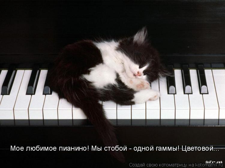 Котоматрица: Мое любимое пианино! Мы стобой - одной гаммы! Цветовой...