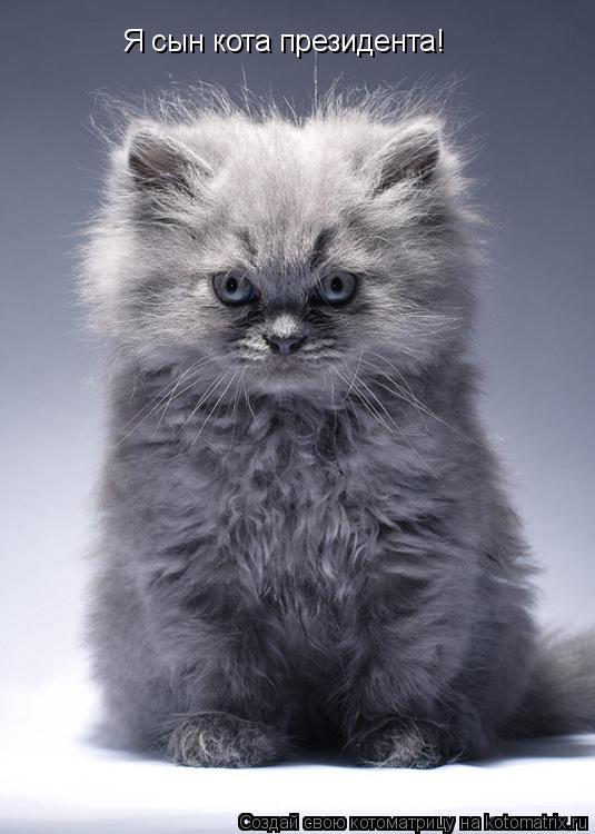 Котоматрица: Я сын кота президента!