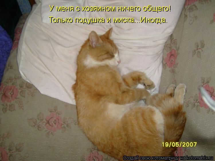 Котоматрица: У меня с хозяином ничего общего! Только подушка и миска...Иногда.