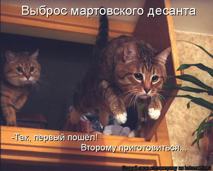 Котоматрица: Выброс мартовского десанта -Так, первый пошёл! Второму приготовиться...