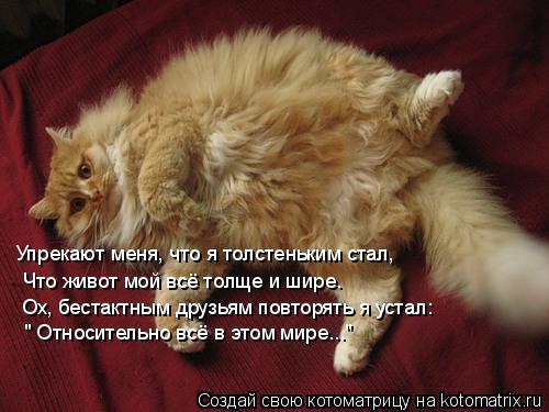 """Котоматрица: Упрекают меня, что я толстеньким стал, Что живот мой всё толще и шире. Ох, бестактным друзьям повторять я устал: """" Относительно всё в этом мир"""