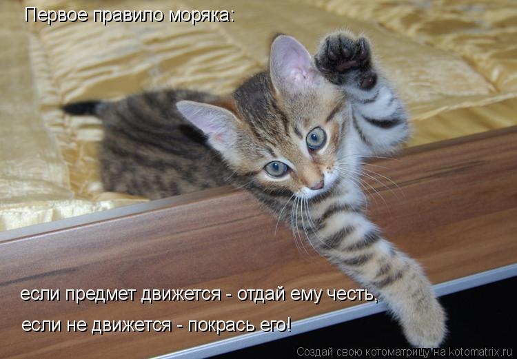 Котоматрица: Первое правило моряка:  если предмет движется - отдай ему честь, если не движется - покрась его!