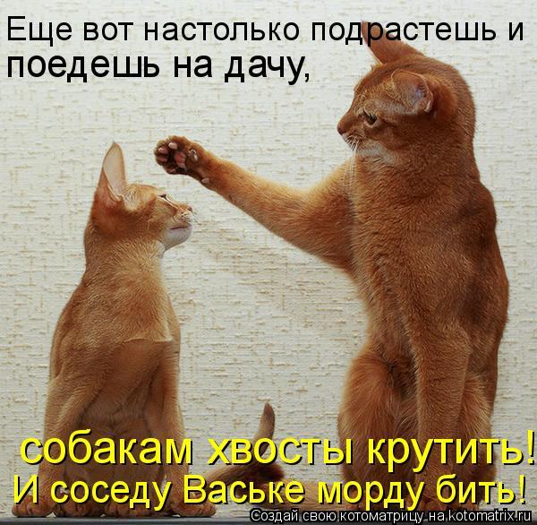 Котоматрица: Еще вот настолько подрастешь и  поедешь на дачу,  собакам хвосты крутить! И соседу Ваське морду бить!