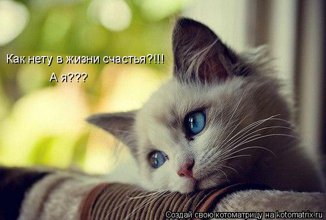 Котоматрица: Как нету в жизни счастья?!!! А я???