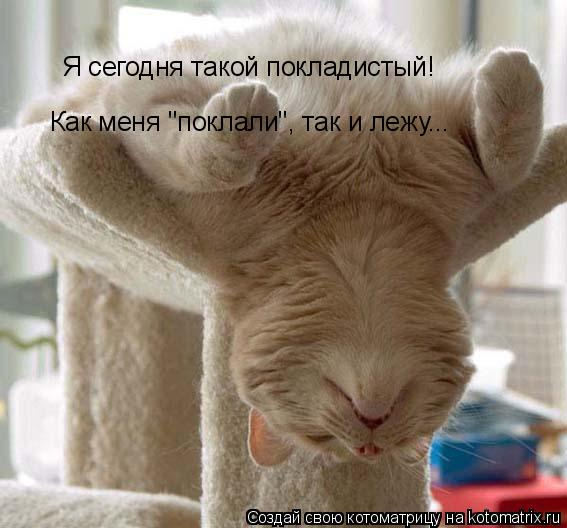 """Котоматрица: Я сегодня такой покладистый! Как меня """"поклали"""", так и лежу..."""