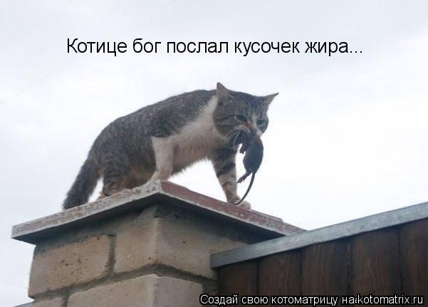 Котоматрица: Котице бог послал кусочек жира...