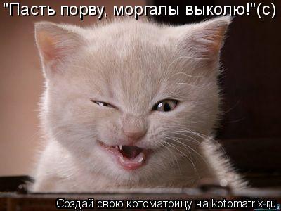 """Котоматрица: """"Пасть порву, моргалы выколю!""""(с)"""