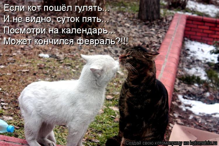 Котоматрица: Если кот пошёл гулять... И не видно, суток пять... Посмотри на календарь... Может кончился февраль?!!!