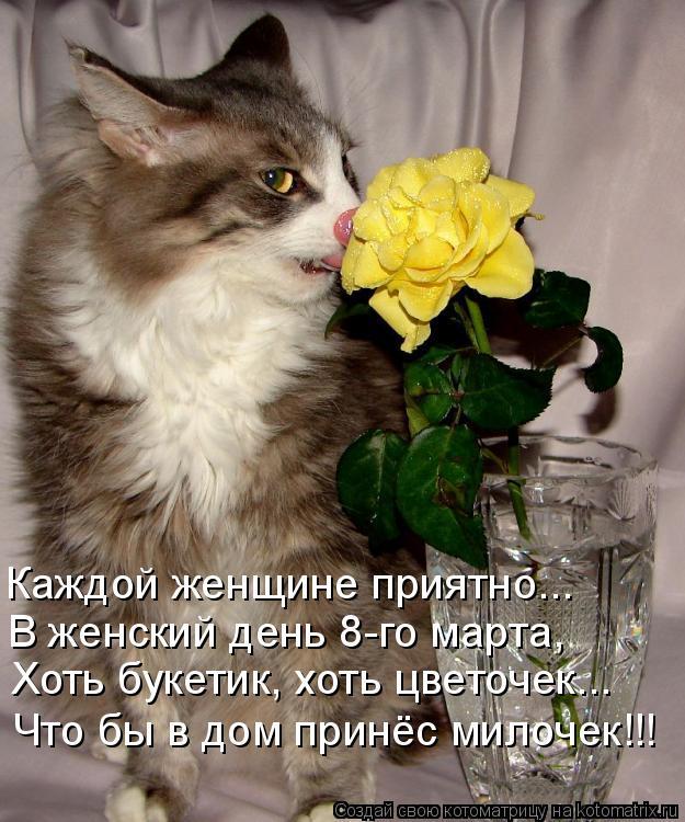 Котоматрица: Каждой женщине приятно... В женский день 8-го марта, Хоть букетик, хоть цветочек... Что бы в дом принёс милочек!!!