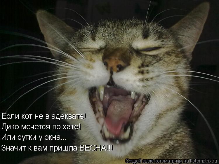 Котоматрица: Если кот не в адеквате! Дико мечется по хате! Или сутки у окна... Значит к вам пришла ВЕСНА!!!