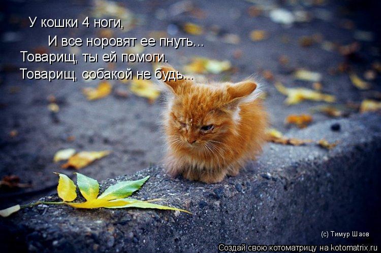 Котоматрица: У кошки 4 ноги, И все норовят ее пнуть... Товарищ, ты ей помоги. Товарищ, собакой не будь... (с) Тимур Шаов