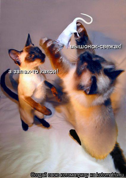 Котоматрица: мышонок-свежак! а запах-то какой!