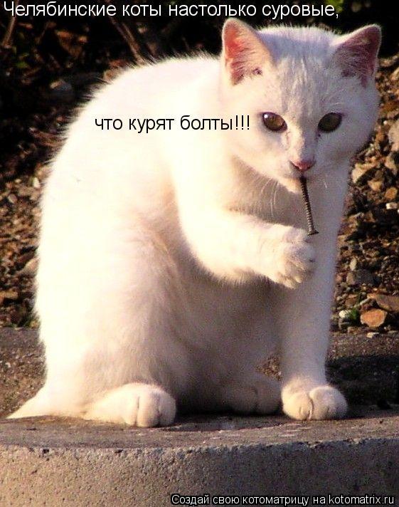 Котоматрица: Челябинские коты настолько суровые, что курят болты!!!