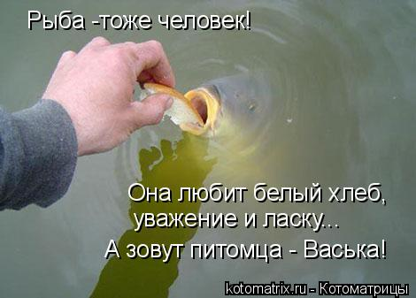 Котоматрица: Рыба -тоже человек! уважение и ласку... Она любит белый хлеб, А зовут питомца - Васька!
