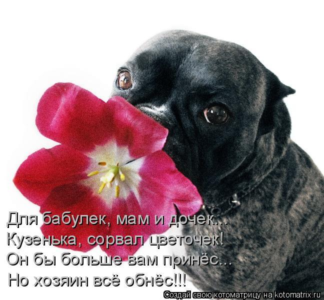 Котоматрица: Для бабулек, мам и дочек... Кузенька, сорвал цветочек! Он бы больше вам принёс... Но хозяин всё обнёс!!!