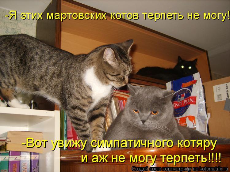 Котоматрица: -Я этих мартовских котов терпеть не могу! -Вот увижу симпатичного котяру и аж не могу терпеть!!!!