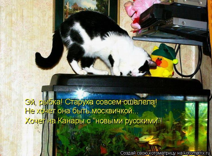 """Котоматрица: Эй, рыбка! Старуха совсем ошалела! Не хочет она быть москвичкой... Хочет на Канары с """"новыми русскими""""!"""
