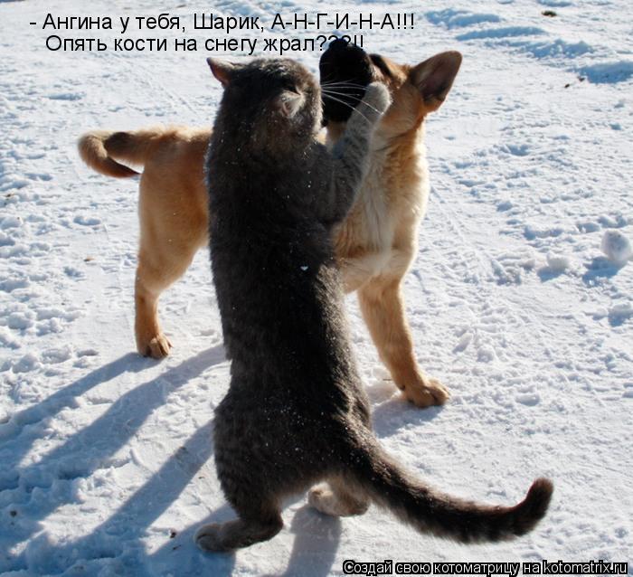 Котоматрица: - Ангина у тебя, Шарик, А-Н-Г-И-Н-А!!!  Опять кости на снегу жрал???!!