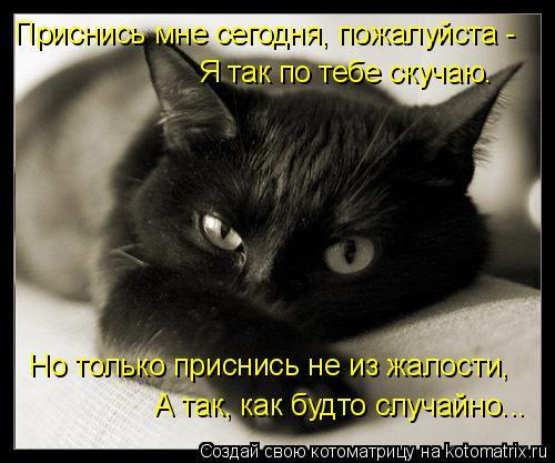 Котоматрица: Приснись мне сегодня, пожалуйста - Я так по тебе скучаю. Но только приснись не из жалости, А так, как будто случайно...
