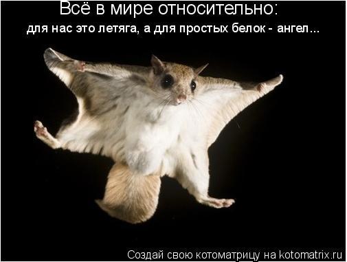 Котоматрица: Всё в мире относительно: для нас это летяга, а для простых белок - ангел...