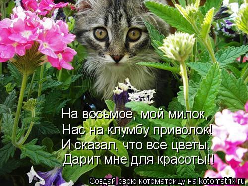 Котоматрица: Нас на клумбу приволок! На восьмое, мой милок, И сказал, что все цветы, Дарит мне для красоты!!