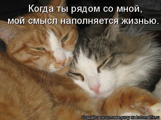 Котоматрица: Когда ты рядом со мной,  мой смысл наполняется жизнью.
