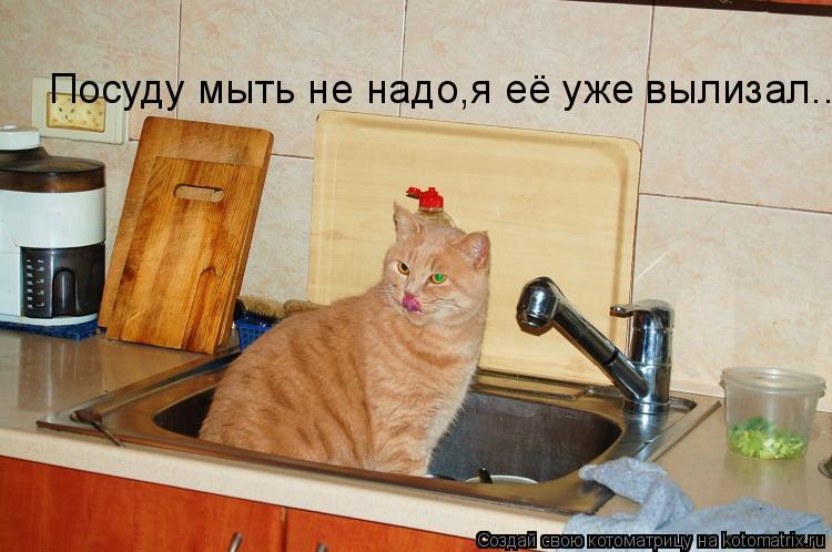 Котоматрица: Посуду мыть не надо,я её уже вылизал....