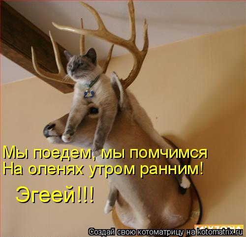 Котоматрица: Мы поедем, мы помчимся На оленях утром ранним! Эгеей!!!