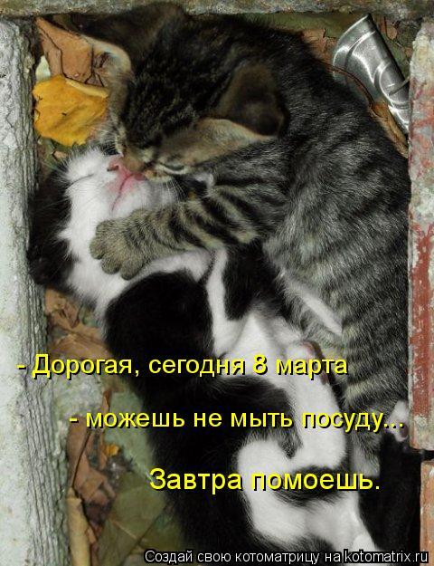 Котоматрица: - Дорогая, сегодня 8 марта  - можешь не мыть посуду...  Завтра помоешь.