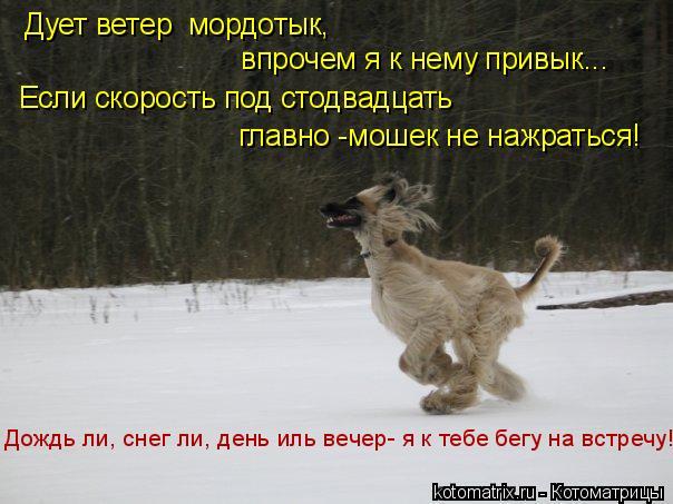 Котоматрица: Дует ветер  мордотык,  впрочем я к нему привык... Если скорость под стодвадцать главно -мошек не нажраться! Дождь ли, снег ли, день иль вечер- я
