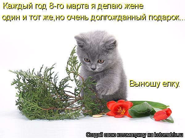 Котоматрица: Каждый год 8-го марта я делаю жене один и тот же,но очень долгожданный подарок... Выношу елку.